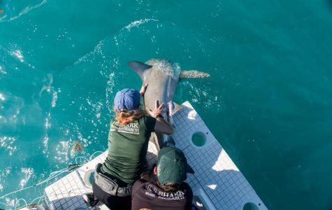 Marine Shark Tagging Field Trip