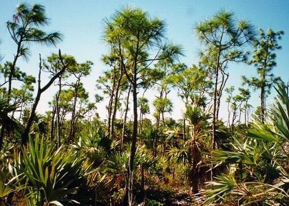 Miami District Judge Halts Pine Rock land Development