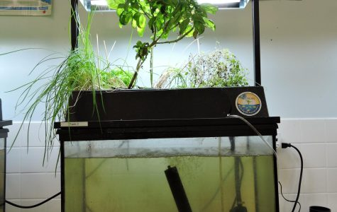 Aquaponics Club: An Underwater Garden