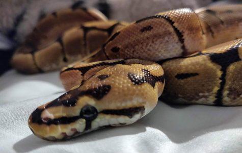 An Exotic Pet Craze