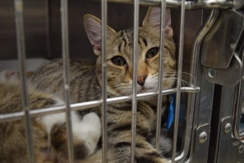 Cats at Broward County Animal Care and Adoption Center wait for their possible adoption