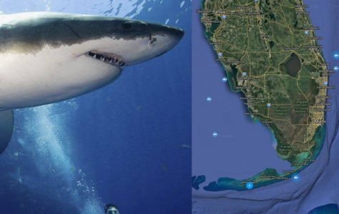 3 Great Whites Roaming the Florida Waters