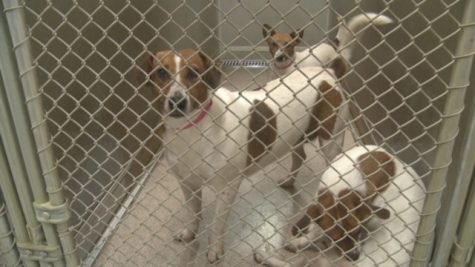 How Corona Virus Affects the Humane Society