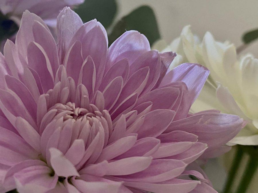 Flower's Bloom